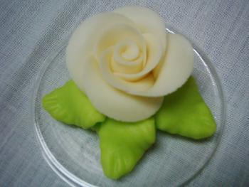 Růže velká bílá